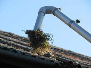 Vac gutter cleaning
